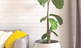 Residential Living Room Plant Pots Plant Pot Idea