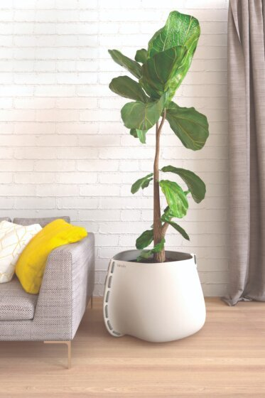 Residential Living Room - Concrete Planters